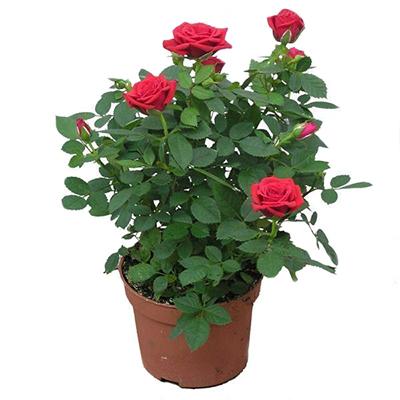 Магазин цветов Тепличный во Владимире на Куйбышева